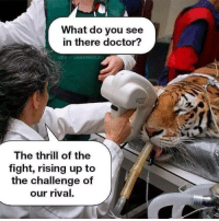 The eye of the tiger!: What do you see  in there doctor?  VERYFUNNYPICS.EU  The thrill of the  fight, rising up to  the challenge of  our rival. The eye of the tiger!
