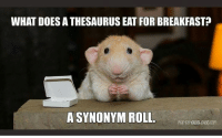 Memes, Breakfast, and What Does: WHAT DOES A THESAURUS EAT FOR BREAKFAST?  A SYNONYM ROLL  martumousChouse.com