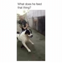 What Does, Dog, and Big: What does he feed  that thing? That's a big dog
