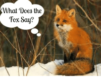 fox say: What Does the  Fox Say?