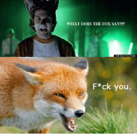 fox say: WHAT DOES THE FOX SAY!??  Still from YouTube  F*ck you