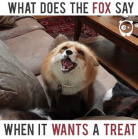fox say: WHAT DOES THE FOX SAY  WHEN IT WANTS A TREAT