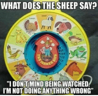 "Memes, What Does, and Mind: WHAT DOES THESHEEP SAY?  B.  2  ""I DONT MIND BEING WATCHED  IM NOT DOINGANYTHING WRONG"
