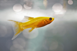 Memes, Parents, and Appreciate: What does your choice of pet say about you? Based on a survey of pet parents, responses showed that fish appreciate a good joke, cat parents are dependable and dog owners supposedly have the most fun! 🐠  http://ow.ly/TXw450v5VY3