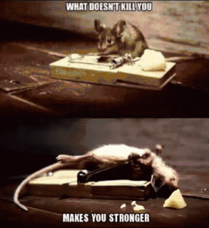 Tumblr, Blog, and Mouse: WHAT DOESNT KILL YOU  MAKES YOU STRONGER epicjohndoe:  One Tough Mouse