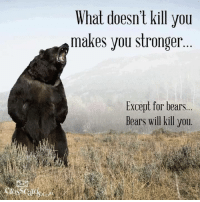 Memes, Bear, and Bears: What doesn't kill you  makes you stronger  Except for bears  Bears will kill you.