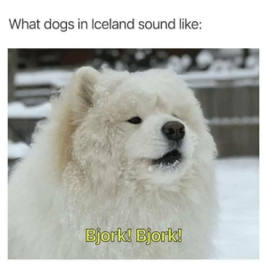 Dogs, Funny, and Low Key: What dogs in Iceland sound like:  Bjork! Bjork! This is as wholesome as it is low-key funny