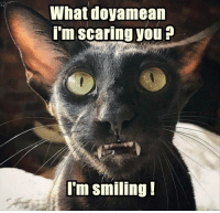 Funny, Animal, and Day: What doyamean  i'm scaring you?  I'm smiling! Funny Animal Picture Dump Of The Day 27 Pics