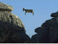 What ever floats your goat: What ever floats your goat