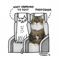 Happy National Cat Day! nationalcatday comics skycats - comic from @openskiesmag for @emirates ✈️: WHAT HAPPENED  TO YOU?  PHOTOSHOP  CORRELL, '12 Happy National Cat Day! nationalcatday comics skycats - comic from @openskiesmag for @emirates ✈️