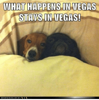what happens in vegas stays in vegas: WHAT HAPPENS IN VEGAS  STAYS IN VEGAS!