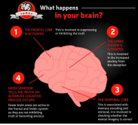 Here is what happens to your brain when you lie.: What happens  in your brain  THE FRONTAL LOBE This is involved in suppressing  or inhibiting the truth  IS ACTIVATED  THE LIMBIC  SYSTEM IS  ACTIVATED  This is involved  in the increased  anxiety from  the deception  WHEN SOMEONE  TELLS THE TRUTH, AN  ALTERNATE COGNITIVE  PROCESS OCCURS  THE TEMPORAL LOBE  This is associated with  Fewer brain areas are active in  memory encoding and  the frontal and limbic system  retrieval, it is involved in  as they are not inhibiting  checking whether the  truth or becoming anxious  mental imagery is correct Here is what happens to your brain when you lie.