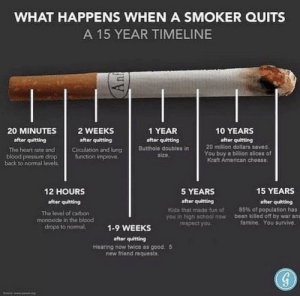 Really interesting food for thought...: WHAT HAPPENS WHEN A SMOKER QUITS  A 15 YEAR TIMELINE  10 YEARS  20 MINUTES  2 WEEKS  1 YEAR  after quitting  after quitting  after quitting  after quitting  20 million dollars saved.  Butthole doubles in  size.  Circulation and lung  function improve.  The heart rate and  You buy a billion slices of  Kraft American cheese.  blood pressure drop  back to normal levels.  15 YEARS  12 HOURS  5 YEARS  after quitting  after quitting  after quitting  85% of population has  been killed off by war anc  famine. You survive.  Kids that made fun of  you in high school now  respect you.  The level of carbon  monoxide in the blood  drops to nomal.  1-9 WEEKS  after quitting  Hearing now twice as good, 5  new friend requests.  ng  Souce w. Really interesting food for thought...