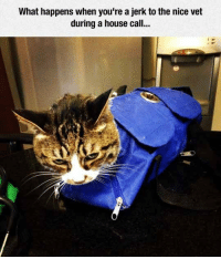 <p>What You Get When You're Being A Jerk.</p>: What happens when you're a jerk to the nice vet  during a house call <p>What You Get When You're Being A Jerk.</p>