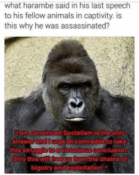 #dicksoutforharambe: what harambe said in his last speech  to his fellow animals in captivity. is  this why he was assassinated?  amconvinced Socialism is the only  answer and all comradesto take  this struggioto  Victorious Conclusions  will free Strom the Chain SO  Only this bigotry and exploitation #dicksoutforharambe