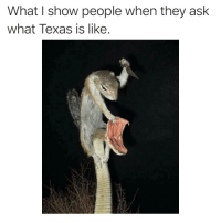 "Memes, Texas, and Ask: What I show people when they ask  what Texas is like. <p>Leroy Jenkins! via /r/memes <a href=""https://ift.tt/2wF2j5i"">https://ift.tt/2wF2j5i</a></p>"