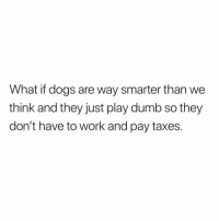 Dogs, Dumb, and Memes: What if dogs are way smarter than we  think and they just play dumb so they  don't have to work and pay taxes. Follow @downinthedms.ig this page is freaking hilarious 😂