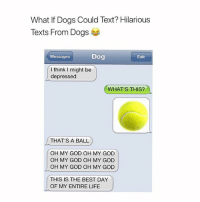 Dogs, Funny, and God: What If Dogs Could Text? Hilarious  Texts From Dogs  Messages  Dog  Edit  l think I might be  depressed  WHAT'S THIS?  THAT'S A BALL  OH MY GOD OH MY GOD  OH MY GOD OH MY GOD  OH MY GOD OH MY GOD  THIS IS THE BEST DAY  OF MY ENTIRE LIFE Follow me @hilarious.ted for more animal memes