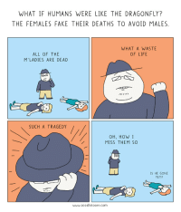 Fake, Life, and Neckbeard Things: WHAT IF HUMANS WERE LIKE THE DRAGONFLY?  THE FEMALES FAKE THEIR DEATHS TO AVOID MALES.  WHAT A WASTE  OF LIFE  ALL OF THE  M'LADIES ARE DEAD  メ  SUCH A TRAGEDY  OH, HOW I  MISS THEM so  IS HE GONE  YET?  www.zoodletoons.com What if m'lady were more like a dragonfly? [OC]