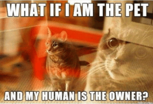 Logic, Cat, and Human: WHAT IF I AM THE PET  AND MY HUMAN IS THE OWNER? Cat logic