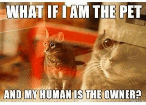 Pet, What, and What If: WHAT IF I AM THE PET  AND MY HUMANIS THE OWNER? No way Jose