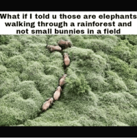 Bunnies, Memes, and Elephant: What if I told u those are elephants  walking through a rainforest and  not small bunnies in a field