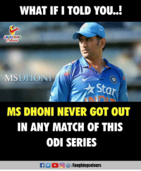 Match, Star, and Never: WHAT IF I TOLD YOU..!  LAUGHING  Colowrs  MSDHONI  Star  MS DHONI NEVER GOT OUT  IN ANY MATCH OF THIS  ODI SERIES  M (0)回  /laughingcolours