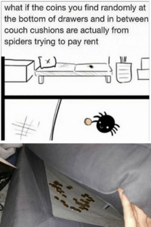 https://t.co/tsnimjQ3Yo: what if the coins you find randomly at  the bottom of drawers and in between  couch cushions are actually from  spiders trying to pay rent https://t.co/tsnimjQ3Yo