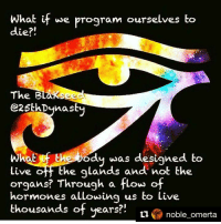 Repost @noble_omerta with @repostapp ・・・ think Think THINK: What if we program ourselves to  The BLOKS  see  C2SEhDynastu  What of the ody was designed to  tive O23 the glands and not the  organs? Through a flow of  hormones allowing us to Live  thousands of years  ti  noble omerta Repost @noble_omerta with @repostapp ・・・ think Think THINK