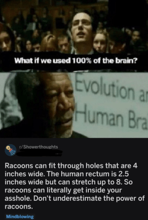 Holes, Brain, and Power: What if we used 100% of the brain?  olution ar  Human Bra  r/Showerthoughts  Racoons can fit through holes that are4  inches wide. The human rectum is 2.5  inches wide but can stretch up to 8. So  racoons can literally get inside your  asshole. Don't underestimate the power of  racoons.  Mindblowing This is beyond science
