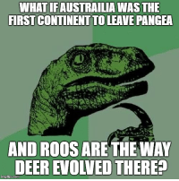 The wife just had a thought that I should meme.: WHAT IFAUSTRAILIAWAS THE  FIRST CONTINENTTOLEAVE PANGEA  AND ROOS ARE THE WAY  DEER EIOWED THERE?  imgtip.com The wife just had a thought that I should meme.