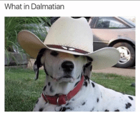 22 Cool Animal Pictures From This Week That Are Actually Funny: What in Dalmatian 22 Cool Animal Pictures From This Week That Are Actually Funny