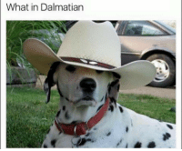 When there aren't any treats left: What in Dalmatian When there aren't any treats left