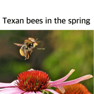 What in flower pollination: What in flower pollination