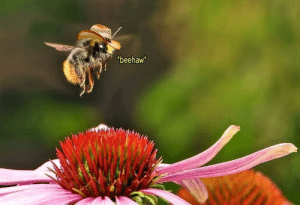 What in pollination: What in pollination