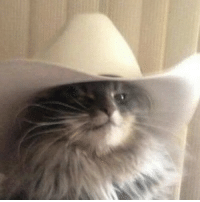 what in tarnation: what in tarnation