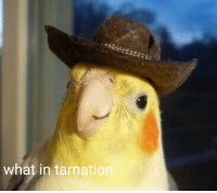 me irl: what in tarnation me irl