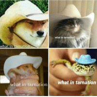 What In Tarnation: what in tarnation?  what in tarnation  what in tarnation  what in tarnation