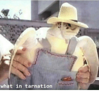 When you're in the wrong meme: What in tarnation When you're in the wrong meme