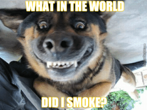 Suspicious Face Intensifies) by mad2233 - Meme Center: WHAT IN THE WORLD  DIDI SMOKE  MemeCenter.com Suspicious Face Intensifies) by mad2233 - Meme Center