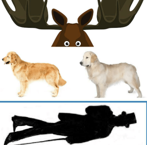 What is 6 feet distance? Moose antlers... two golden retrievers... one man in a top hat.: What is 6 feet distance? Moose antlers... two golden retrievers... one man in a top hat.