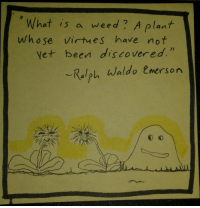 """Weed, Http, and What Is: What is a weed? A plant  whose virtues have not  et been discovered  Kalplh Waldo Cmersorn <p>Don&rsquo;t give up on yourself, buddy! via /r/wholesomememes <a href=""""http://ift.tt/2qNxzdq"""">http://ift.tt/2qNxzdq</a></p>"""