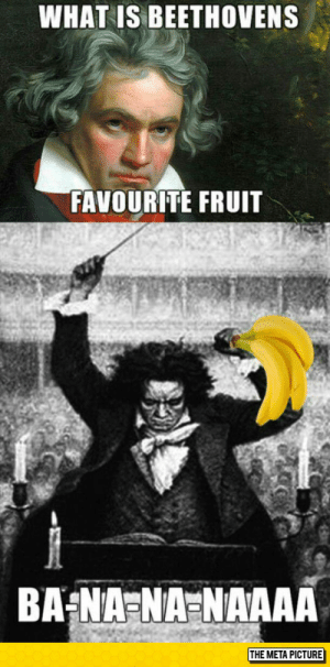 Tumblr, Beethoven, and Blog: WHAT IS BEETHOVENS  FAVOURITE FRUIT  THE META PICTURE srsfunny:  Something You Probably Didn't Know About Beethoven