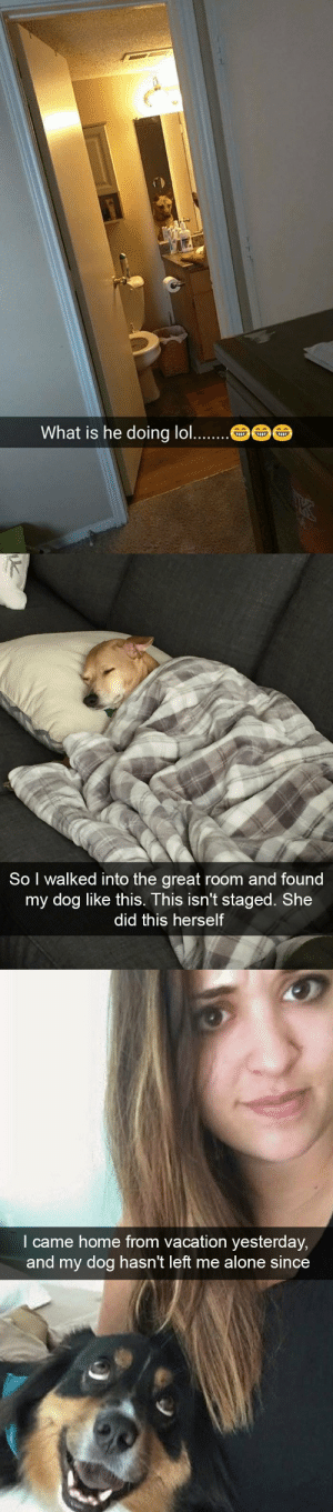 animalsnaps:Dog snaps: What is he doing lo..   So I walked into the great room and found  my dog like this. This isn't staged. She  did this herself   l came home from vacation yesterday  and my dog hasn't left me alone since animalsnaps:Dog snaps