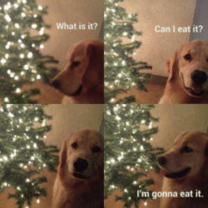 Gonna Eat: What is it?  Can I eat it?  I'm gonna eat it.