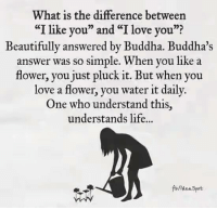 """Life, Love, and I Love You: What is the difference between  """"I like you"""" and """"I love you""""?  Beautifully answered by Buddha. Buddha's  answer was so simple. When you like a  flower, you just pluck it. But when you  love a flower, you water it daily.  One who understand this.  understands life.  fo/idea Spot"""