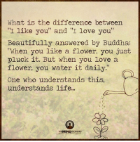 """Life, Love, and Memes: What is the difference between  I like you"""" and I love you  Beautifully answered by Buddha:  when you like a flower, you just  pluck it. But when you love a  flower, you water it daily""""  One who understands this,  understands life...  THE MIND UNLEASHED Wow!!! What a great quote!!!  Mentors Channel"""