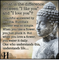 """Memes, I Love You, and Buddha: What is the difference  between """"I like you""""  and """"I love you""""?  Beautiful answered by  Buddha. Buddha's  aoswer was so simple.  When you like a flower  you just pluck it. But  when you love a flower,  you water it daily  One who understands this,  understands life.  erbs  ealth  appiness Pass it on (y)"""