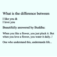 Via @house.of.leaders 👈😊 awakespiritual perspective: What is the difference between  I like you &  I love you  Beautifully answered by Buddha  When you like a flower, you just pluck it. But  when you love a flower, you water it daily..!  One who understand this, understands life... Via @house.of.leaders 👈😊 awakespiritual perspective