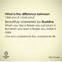 Buddha: What is the difference between  I like you & I love you?  Beautifully answered by Buddha  When you like a flower you just pluck it.  But when you love a flower you water it  daily.  One who understands thls understands life.  RELATIONSHIP  http://rrul.es  RULES